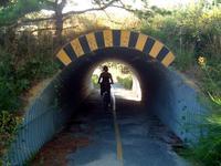 race_point_bike_em.jpg